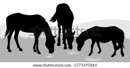 vector silhouettes of grazig