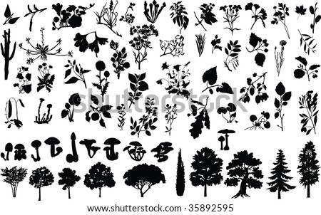 vector silhouettes of herbs