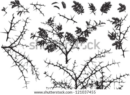 Vector Silhouettes of various Acacia branches with leaves and thorns