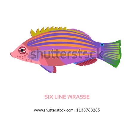 vector six line wrasse fish on