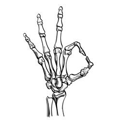Vector skeleton hand showing gesture ok. Illustration isolated on white background