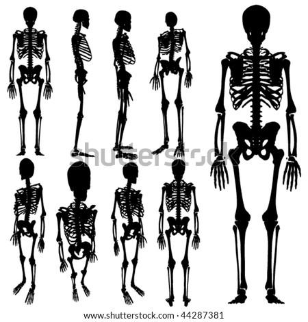 vector skeleton silhouette set