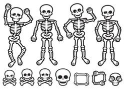Vector skeletons and skulls