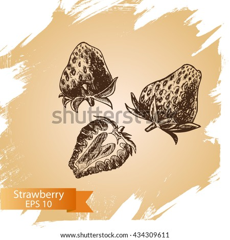 vector sketch background fruit