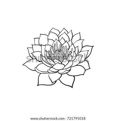 Vector Sketch Cartoon Lotus Flower Blossom Blooming Isolated