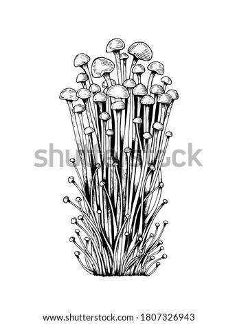 Vector sketch enoki mushrooms black white graphics, family of mushrooms, edible white tender mushroom, vegetarian, japanese mushrooms isolated on white background for printing, cookbook, logo.