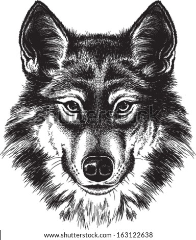 vector sketch of a wolf's face