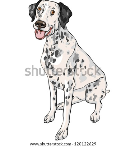 vector sketch of the cheerful spotted smiling dog Dalmatian breed