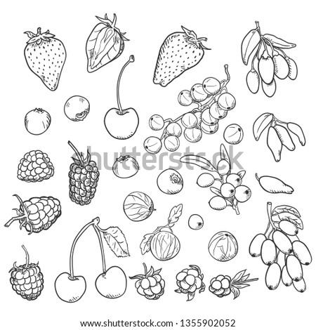 Vector Sketch Set of Berries. Different Types