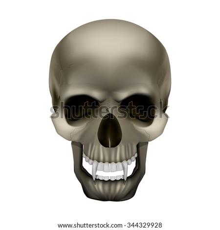 vector skull vampire monster