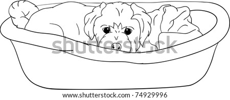 vector   small puppy lying in