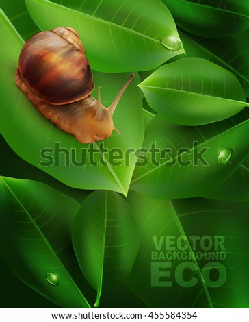 vector snail crawling on the