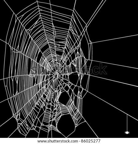 Vector spider web