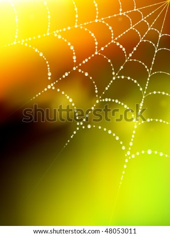 vector spider web illustration