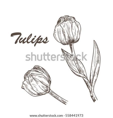 vector spring flowers flower