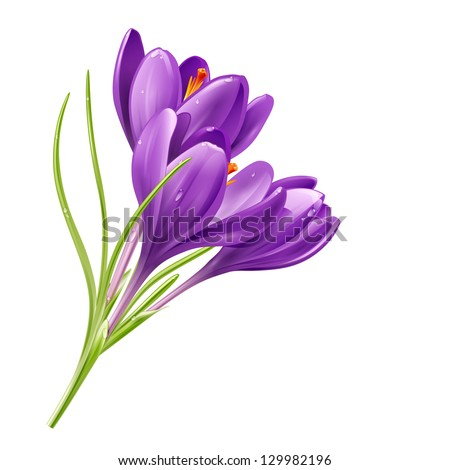 vector spring flowers isolated