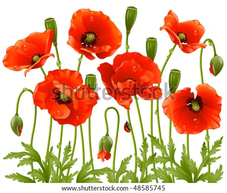 Vector spring flowers: poppy