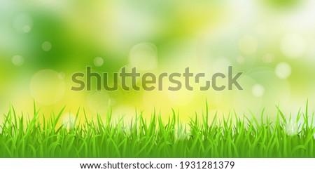 vector spring illustration
