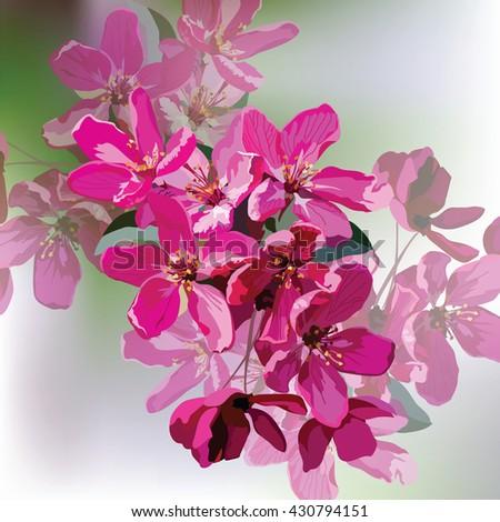 vector spring summer pink
