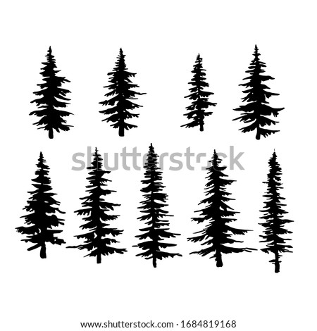 vector spruce tree, ink plant sketch, hand drawing, black silhouette