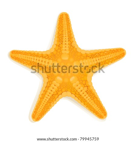 vector starfish