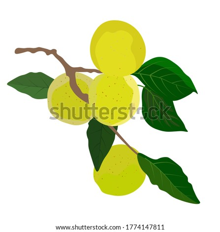 vector stock illustration of a