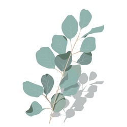 Vector stock illustration of eucalyptus leaves. Delicate tropical leaves for the bride's bouquet. A branch of mint-colored flowers. Spring or summer flowers for invitation, wedding or greeting cards.