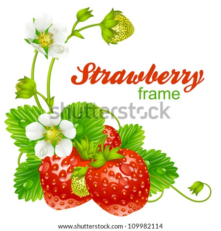Vector strawberry frame. Red berry and white flower isolated on background