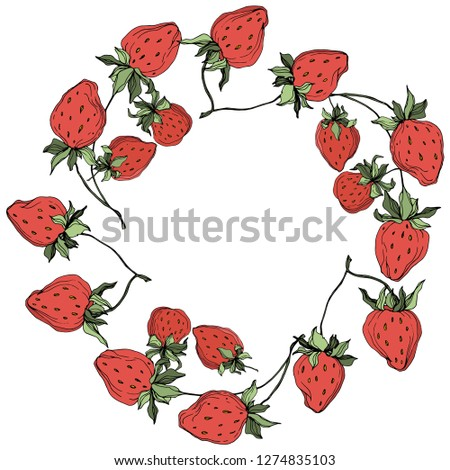 Vector Strawberry fruits. Green leaf. Leaf plant botanical garden floral foliage. Red and green engraved ink art. Frame border ornament square.