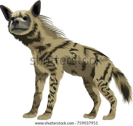 vector striped hyena