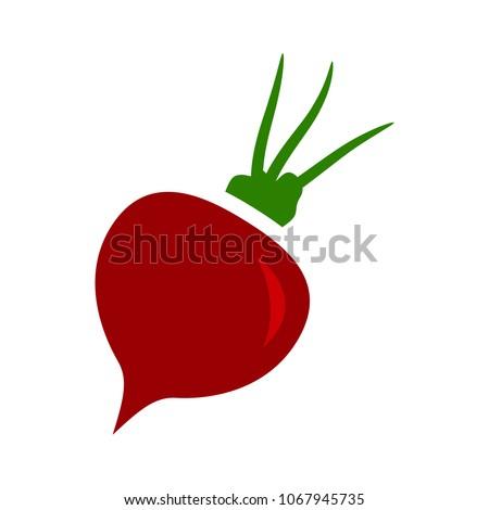 vector sugar Beet illustration isolated - healthy vegetable, nutrition icon - veggie food, vector beetroot