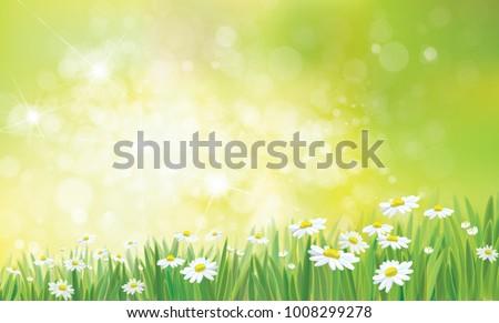 vector summer   green   nature