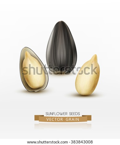 vector sunflower seeds isolated