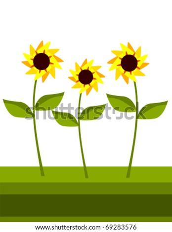 vector sunflowers growing in