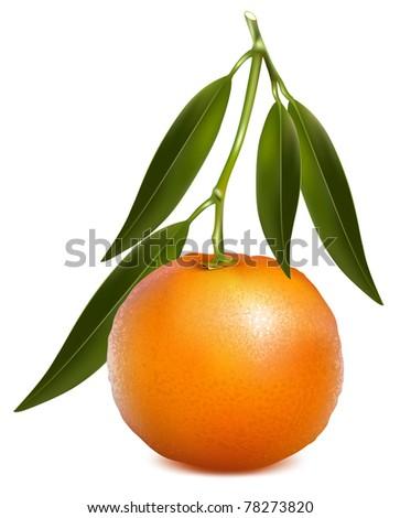 Vector tangerine (mandarin) with leaves.