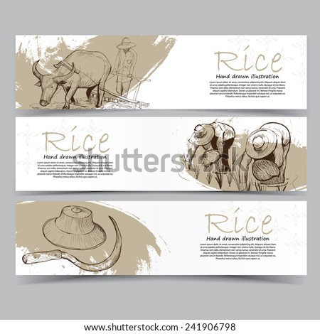 Vector template banners Hand drawn illustrations of Rice abstract background