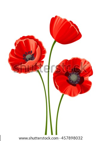vector three red poppies with