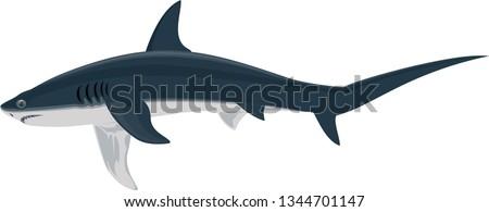 vector Thresher shark