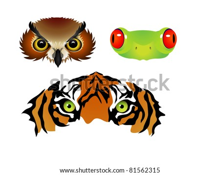 vector tiger owl frog eyes