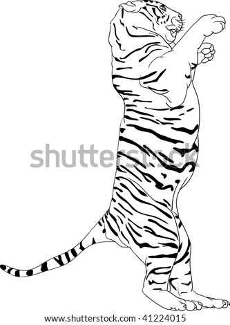 vector  tiger  standing on hind