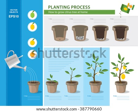 recommened info for oranges how to grow