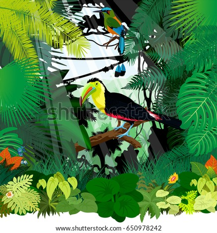 vector toucan and Turquoise browed Motmot in Jungle Rainforest