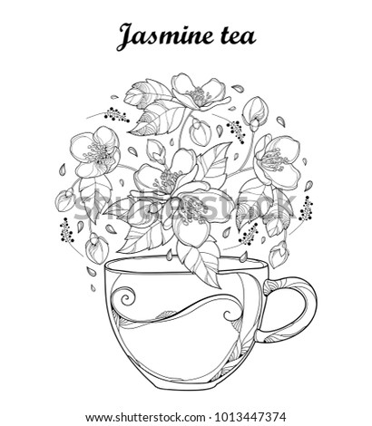 Vector transparency cup of Jasmine herbal tea isolated on white background. Outline flowers, bud and leaves in black and white in contour style. Floral elements for spring design and coloring book.