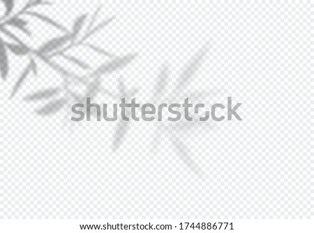 Vector Transparent Shadow of Tree Leaves. Decorative Design Element for Presentations and Mockups. Creative Overlay Effect