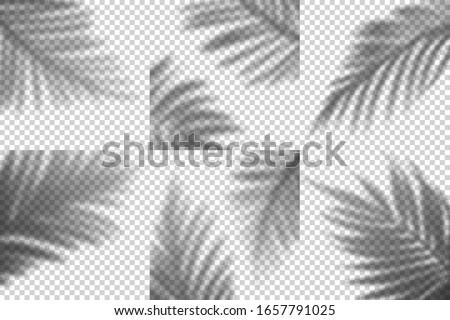 vector transparent shadows of