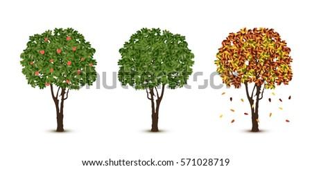 vector trees set on white