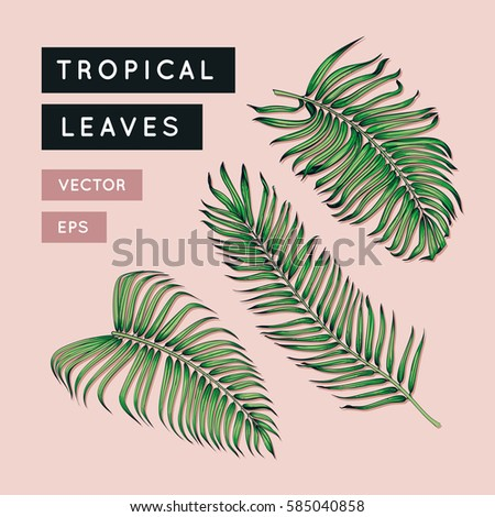 Vector tropical leaves set. Jungle tree branch. Vintage floral illustration. Hawaiian art. Exotic plants leaf. Botanical drawing. EPS 10. #585040858