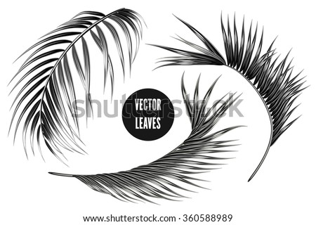 vector tropical monochrome palm