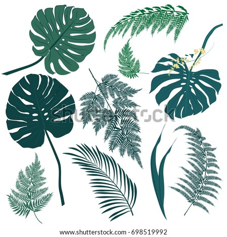 Vector tropical palm leaves, jungle leaves and set isolated
