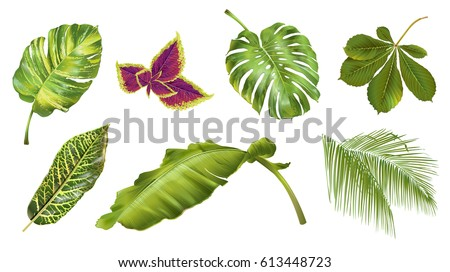 Shutterstock Vector tropical plants and leaves realistic set isolated on white background. Botanical exotic elements for spa, summer, exotic, hawaiian style or wedding design